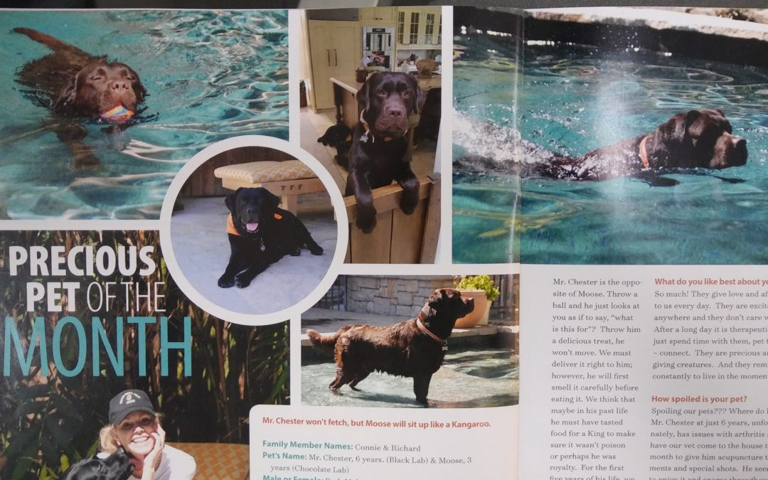 "The Moose & Mr. Chester featured as ""Precious Pets of the Month"""