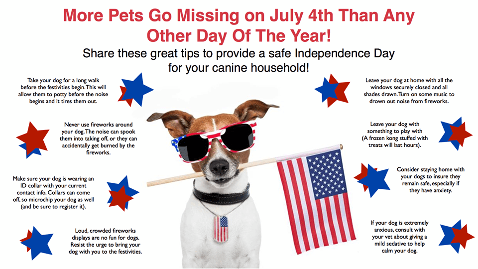 Top 10 Pet Safety Tips for the 4th of July